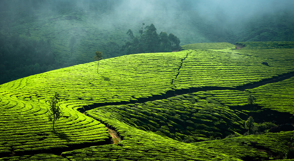 best resorts in munnar for family